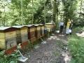 Visite du rucher