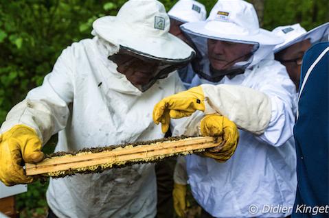 Reprise des cours d'apiculture